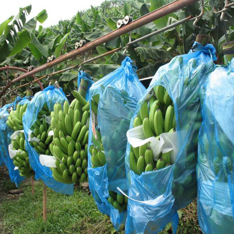 Tnt Non Woven Fabric Nonwoven fabric bags for banana protection