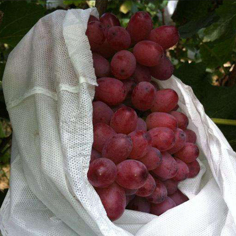 Agricultural Cloth PP nonwoven fabric for fruit bags