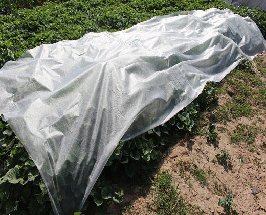 Nonwoven for crop protection