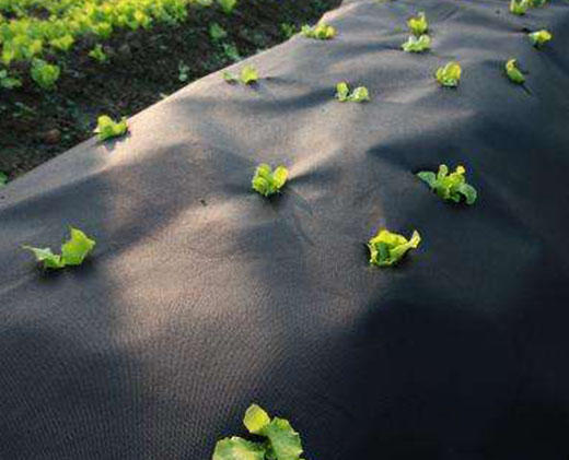 Weed control nonwoven film Non Woven Crop Cover